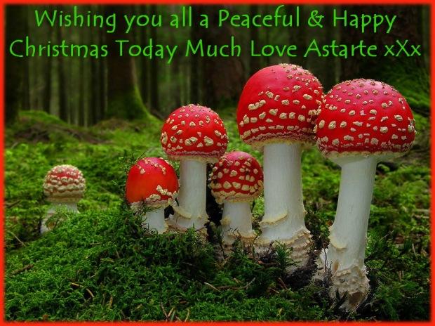 mushrooms-amanita-24