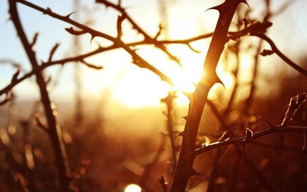 branches-trees-sunrise-nature-thorns-hd-wallpaper